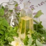 Tanaman sumber dari obat herbal