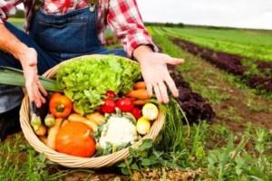 Pembangunan Sektor Pertanian