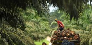 KADIN untuk Indonesia